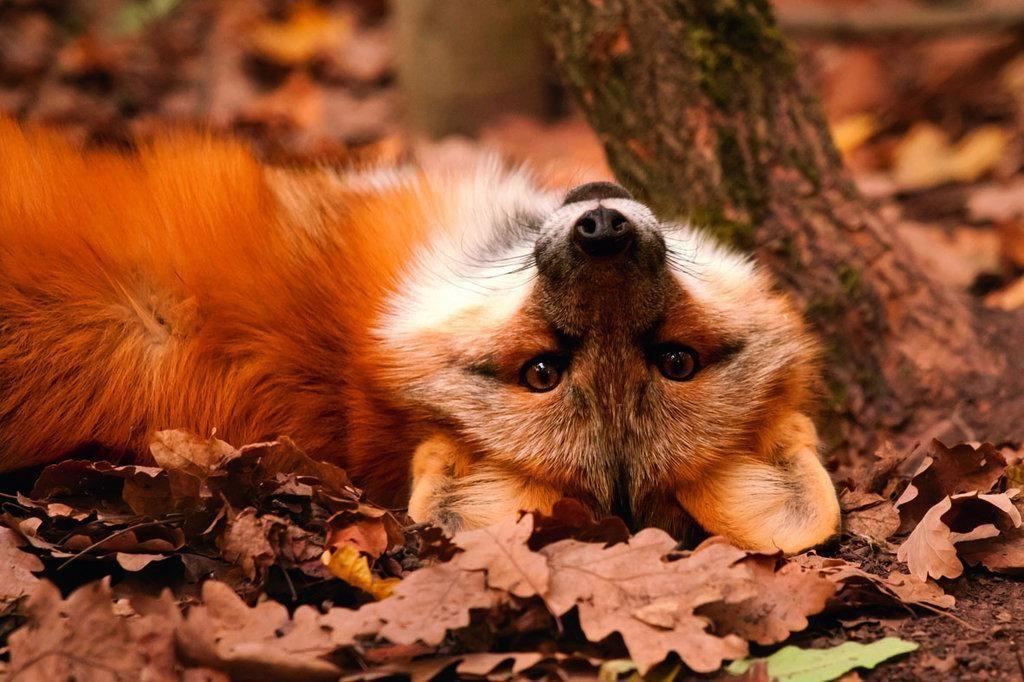 Открытка, картинки осень с животными красивые и смешные