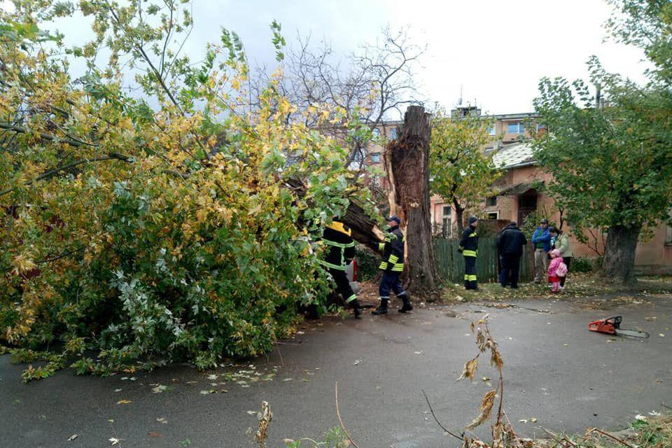 В Ужгороді сильний буревій повалив дерева і наробив шкоди  фото і відео -  24 Канал (7.99 18) 8096fdb1a3963