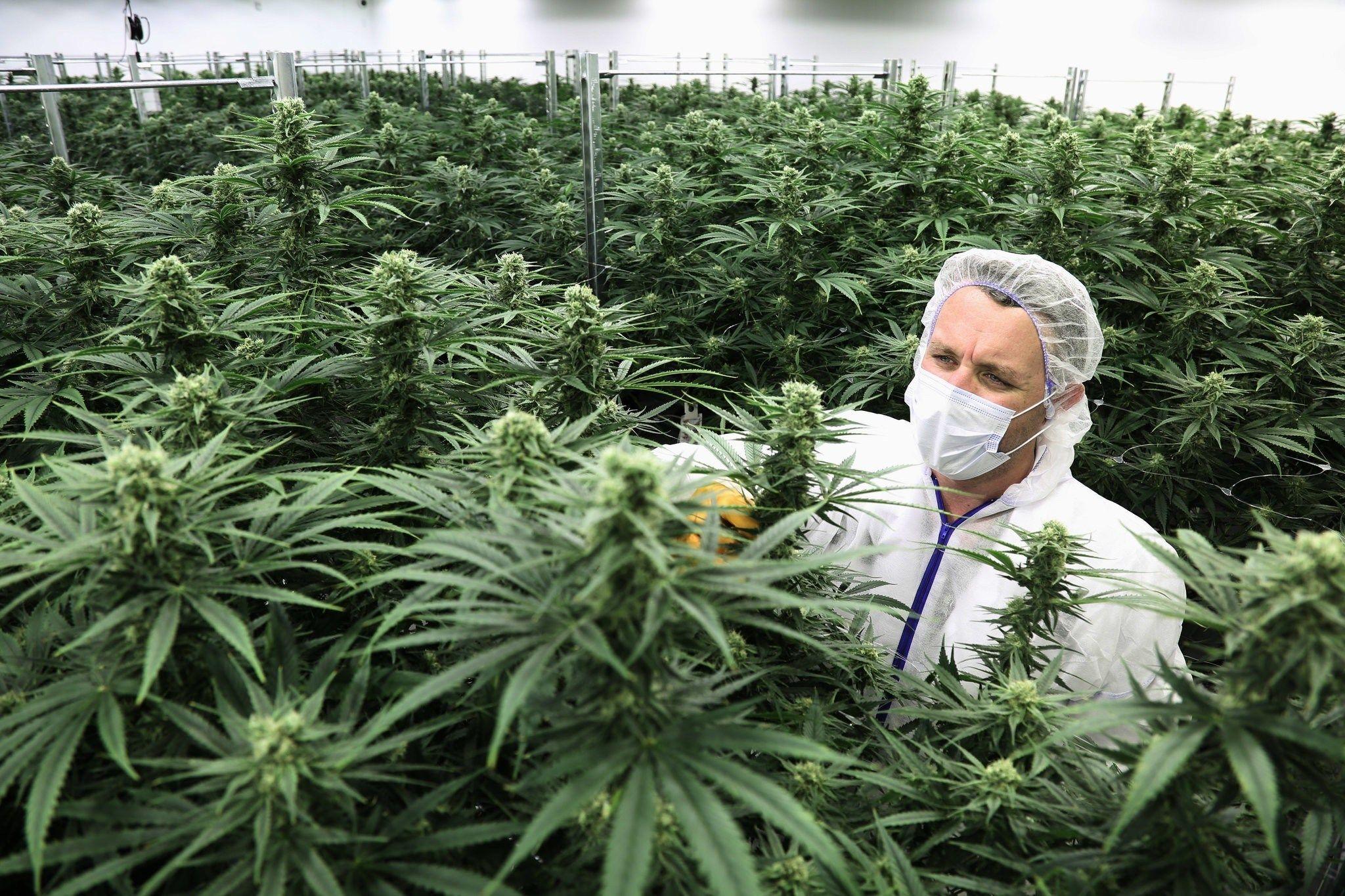 Есть ли в марихуане допинг 1 грамм марихуаны цена