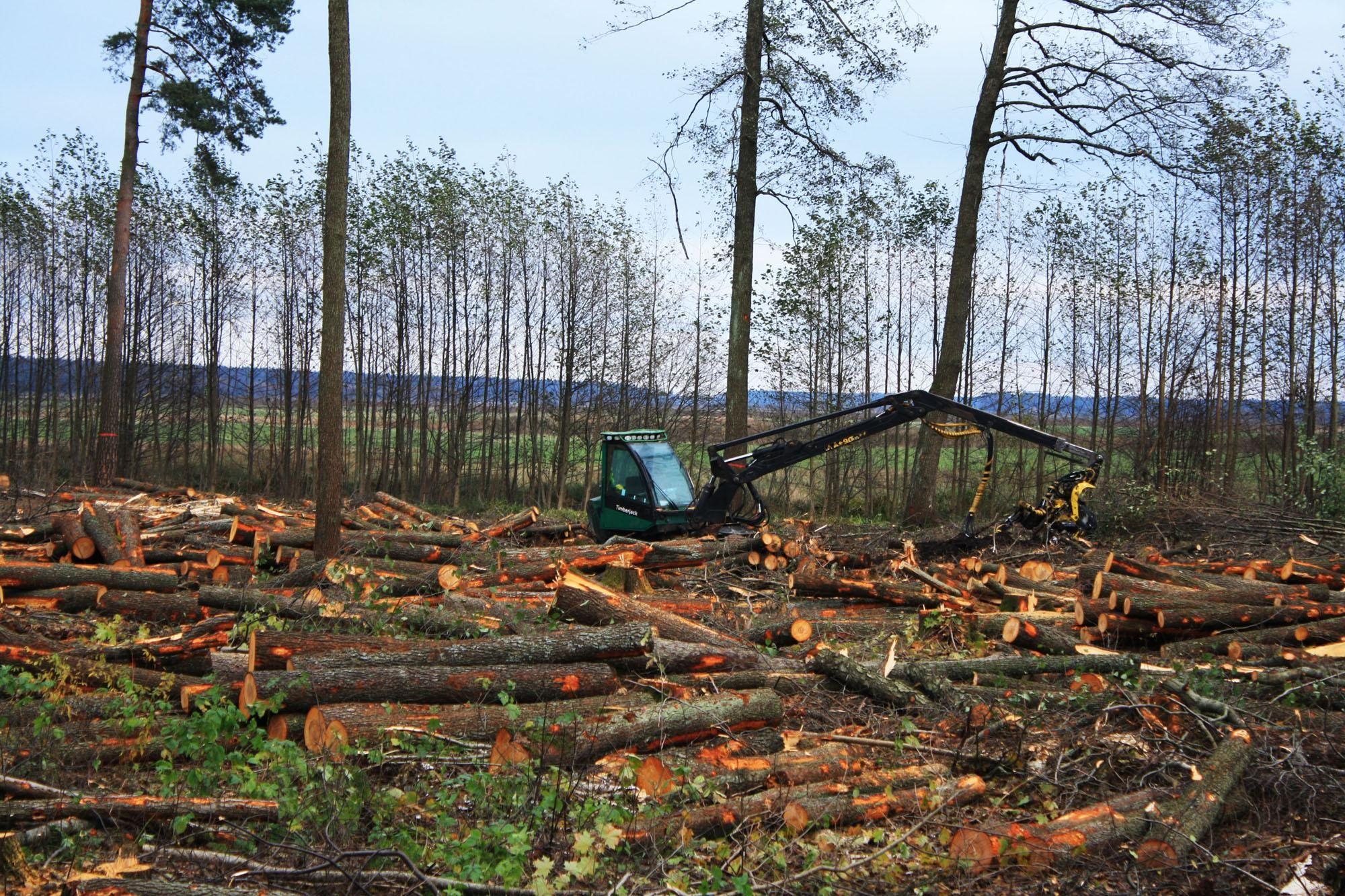 На Львівщині деревину контрабандою вивозять до Європи