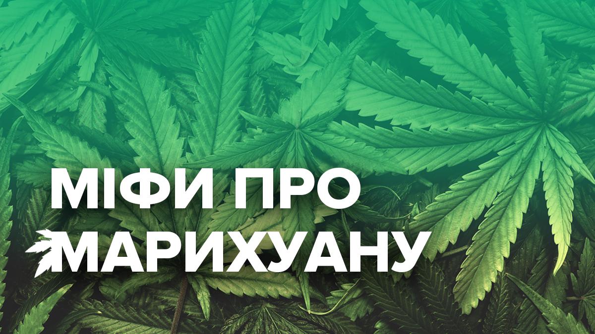 Польза конопли на человека сдача крови на марихуану