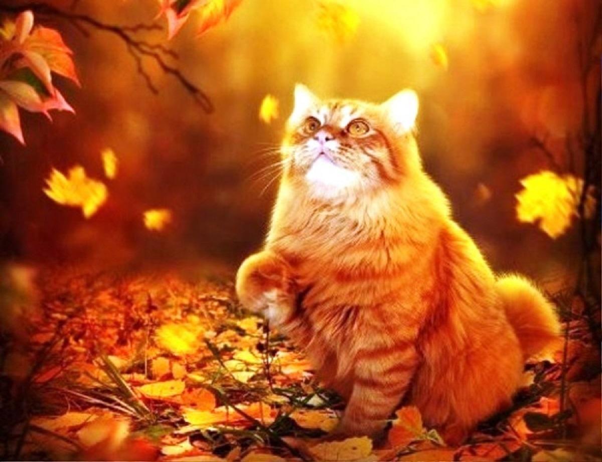 Открытки кота с осени