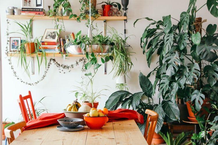 Алергія на домашні рослини\