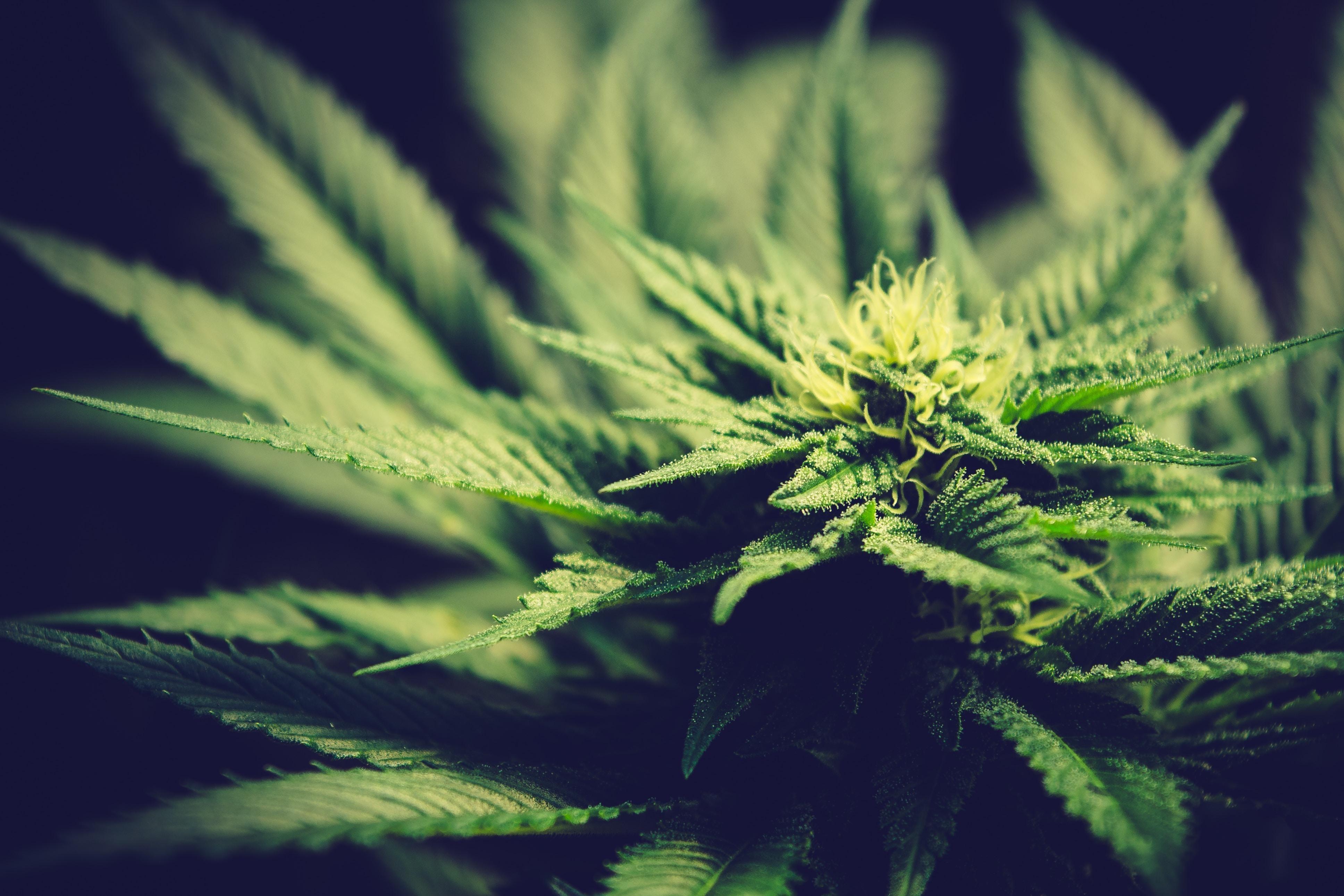 Конопля глауком поезде марихуана в