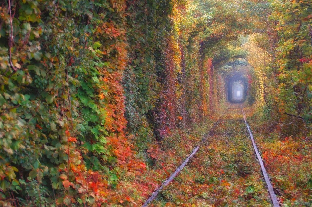 Тунель кохання Рівненщина