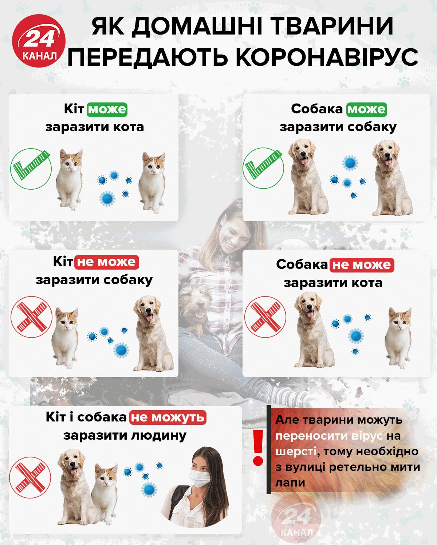 коронавірус у тварин