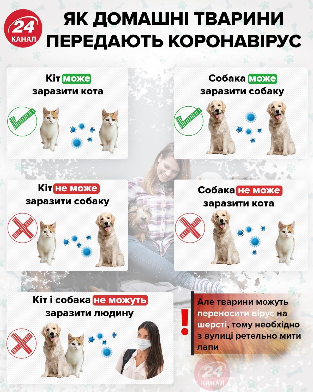 домашні тварини коти собаки коронавірус
