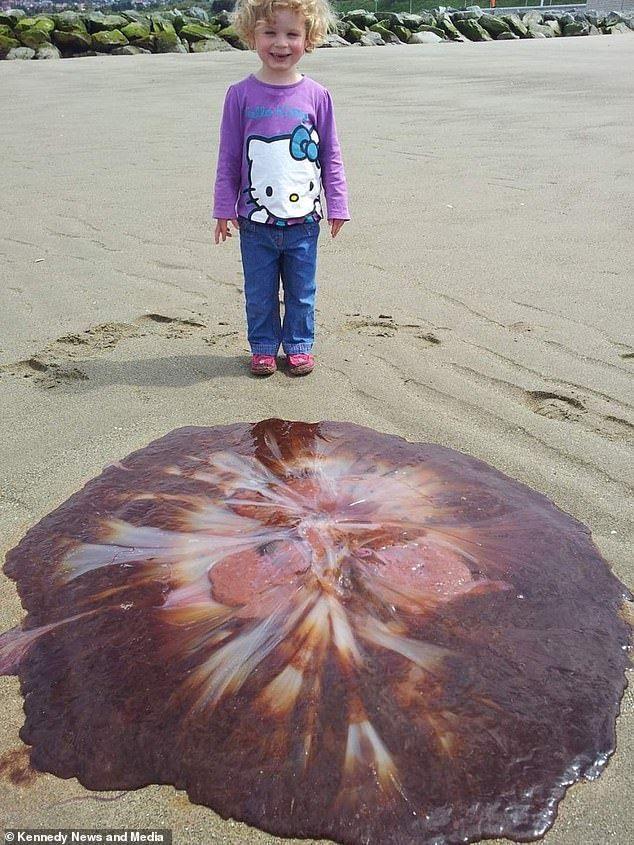 Медуза на пляжі Британії