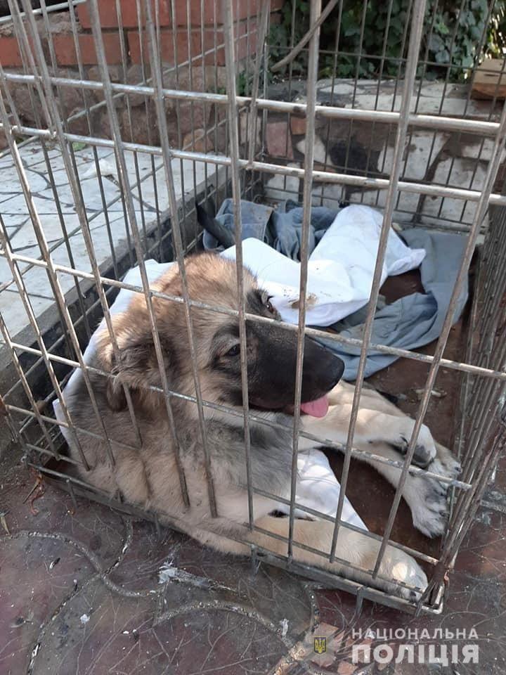 На Запоріжжі поліція відкрила кримінальне провадження за фактом жорстокого поводження з тваринами