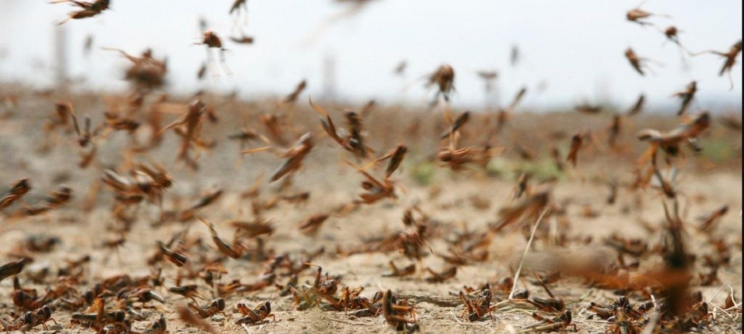 Не счесть белых мух: полчища мошек атаковали российский Красноярск – впечатляющее видео - Россия новости - 24 Канал
