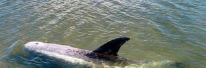 Дельфіна врятували в Азовському морі: щемливе відео