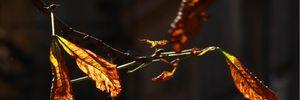 Прогноз погоди на 26 листопада: на Заході та Півдні буде сонячно