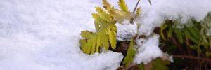 Прогноз погоди на 1 грудня: в Україні буде сонячно та сніжно