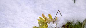 Прогноз погоды на 1 декабря: в Украине будет солнечно и снежно