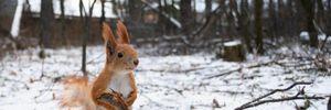 Прогноз погоды на 3 декабря: в Украине потеплеет, но на дорогах – гололед