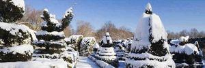 В Україні вирощують 13 мільйонів новорічних ялинок: плантація є в кожній області
