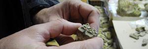 На Буковине обнаружили зуб мамонта, которому 300 тысяч лет: фантастические фото