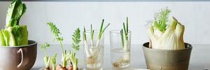 Вони знову ростуть: 6 овочів, які можна відростити з відрізаних коренів