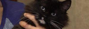 В Черкассах выводят новую породу кошек: как они выглядят – фото
