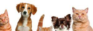 Безпритульних поменшає: UAnimals безкоштовно стерилізуватиме тварин
