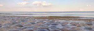 Відпочинок на українському морі: чи буде знову нашестя медуз у літньому сезоні 2021