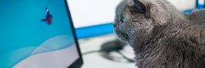 """""""Кот выключил компьютер и все исчезло"""": смешные отговорки работников во время карантина"""