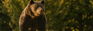 Австрийского принца заподозрили в убийстве крупнейшего медведя в Евросоюзе – Артура: фото