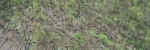 В Житомирской области пронесся мощный смерч: 20 гектаров леса повреждены