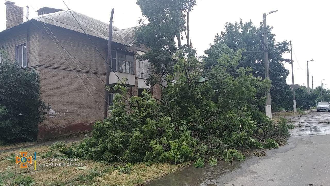 Багато дерев повалив вітер