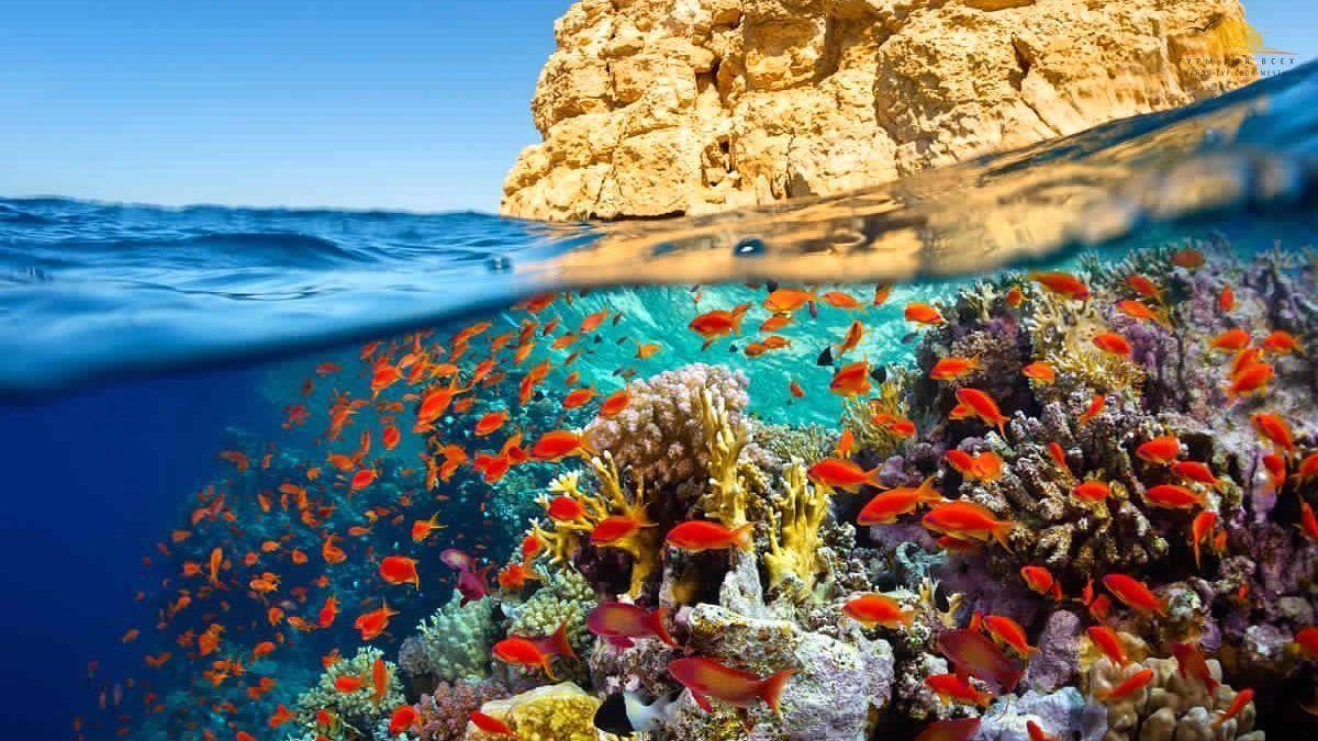 Кораловий риф у Шарм-ель-Шейху