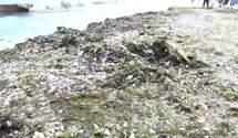 Страшні подробиці екологічного дослідження Чорного моря: що знайшли вчені