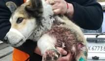 Проти чиновника, який волочив за авто собаку, відкрили кримінальну справу – відео (18+)