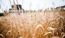 Затяжной карантин может пагубно повлиять на агросектор: объяснение эксперта