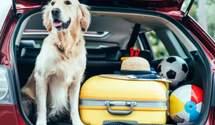Як подорожувати з тваринами: правила, які треба знати