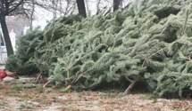 200 тисяч дерев до зимових свят: які ціни на ялинки в регіонах України
