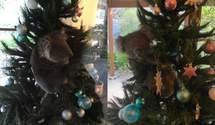 Санта в шортах, питоны и коалы  на елке: как празднуют Рождество в Австралии - фото