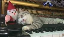 Котик спит внутри фортепиано, пока его владелец играет рождественские мелодии: милые фото, видео