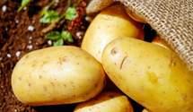 Українська картопля на ринку ЄС: які умови