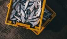 Україна збільшила вилов риби