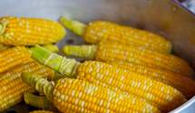 В Украні різко впала ціна на кукурудзу