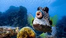 Найкумедніші фото диких тварин: з'явилася перша порція смішинок