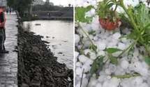 Зруйнована набережна і втрачений урожай: наслідки негоди на Дніпропетровщині