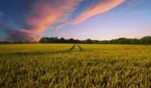 Урожайность агрокультур в мире снизится на 10%, – прогноз