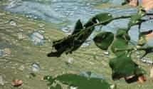 Дніпро гине через миючі засоби: у Київводоканалі пояснили, чому вода у річці – зелена