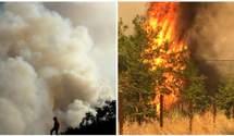 У США спалахнули нові лісові пожежі: дим наближається до Лос-Анджелеса
