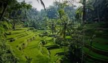"""Відкриється тільки для багатих: острів Балі має намір заборонити в'їзд """"бюджетним"""" туристам"""