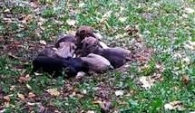 Волонтери забили на сполох через отруєння собак у Переяславі: за справу взялася поліція