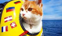 Украинский кот-путешественник Кока: 25 тысяч километров в небе и заблокированный инстаграм