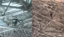 """""""Скелелаз"""" в російському аеропорту: чоловік заліз під дах терміналу – епічне відео"""