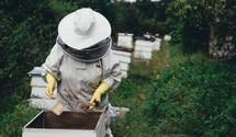 Пандемія спровокувала ріст цін на продукти бджільництва